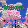 秋田市の桜 史上最速で満開に!〜EOS R5+「RF50㎜ F1.2L USM」「RF70-200㎜ F2.8L IS USM」〜