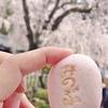 しだれ桜を見に、身延山久遠寺へ