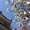 【弁財天 出町妙音堂】白い本殿とハクモクレン【京都下鴨あたり】