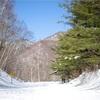 美しい冬の森を歩く