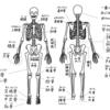 ヨガノート(4)全身の骨格について - 印刷OK!お家ヨガ入門応援企画
