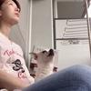 保護施設にいる動物達に自宅からできる支援。amazonからも簡単にできる支援について書いてみた。