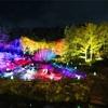 六甲高山植物園の紅葉ライトアップと神戸の夜景