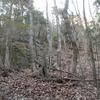 山へ柴刈りではなく、榾木とりに