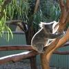 シドニー(オーストラリア)音楽留学 住んでいた賃貸アパートのご紹介
