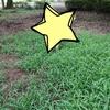 東京都内でカブトムシが採れる公園