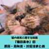【猫の鼻水】病気かも?猫の鼻水に関する知識まとめ(症状・原因・危険性・対処法)