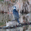 早朝の浮間公園で野鳥探索
