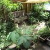 真夏の庭と、カマンベールチーズケーキ