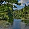 「ハムラナ・スプリングス森林公園 (The Hamurana Springs Reserve)」~この静寂の世界を是非紹介したく!!