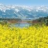 長野県飯山市 幸せの黄色に包まれて「ハッピーイエローフォト」