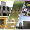 ヨーロッパのオススメ旅行 ベスト5 第4位 南フランス、ゴッホ、フラミンゴ、セザンヌとマルシェ