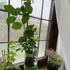 植物は自主性を大事にして育てても問題ないぐらいたくましい方が付き合いやすい