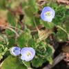2019年3月の観察記録(植物)