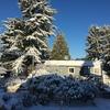 2月は雪が多かったバンクーバーで、留学生ライフ続行中。