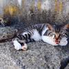 情島は情けの島で猫の島