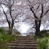 桜への階段