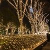 新宿の夜を歩く✨✨キラッキラな道を発見😆😆