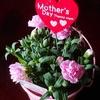 今日は「母の日」、、、、