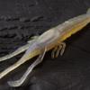 【ジャッカル】テナガエビをイミテートしたネコリグ での使用を主眼に開発されたワーム「ネコシュリンプ」発売!