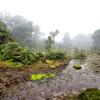 (昔話)屋久島⑩ 小花之江河 日本最南端の湿原 と飲み屋の話