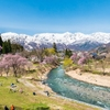 桜と雪の素敵なミスマッチ 春スキー