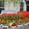 知事賞受賞花壇を取材しました。(平成27年10月16日)