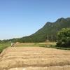 黒豆畑の畝立て(2018年5月26日)