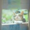 新東京都知事小池百合子さんの公約に動物の殺処分のゼロが謳われています。