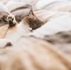「寒くなった季節にかけ布団の進化を実感する『温度調節かけ布団」の実力」