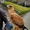 浜松城公園を訪れた鷲