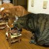 猫の食事【キャットフードにおやつ】猫にとって楽しみな時間