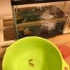 金魚が白点病と尾腐れ病に。