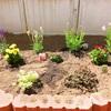 ◆花壇に花を植えました◆