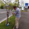 ◆2016.8.14. 院長、芝を刈る