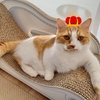 わがやで預かる予定だった預かり猫さんについて嬉しいお知らせが。
