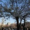 錦糸公園の桜…