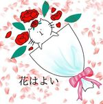 胡蝶蘭はギフトに貰った後、そこからが楽しい〜育て方&ランの頑張り〜