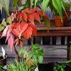 わが家の庭冬支度
