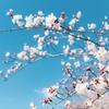 愛してやまないPENTAX FA LimitedレンズとEOS Rで桜を切りとる@2019