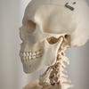 骨の歪みを調整して体調管理をしましょう。
