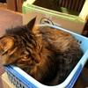 炸裂!怒りの猫パンチ