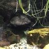 岐阜県各務原市の世界淡水魚園水族館「アクア・トトぎふ」に行ってきました Part-1 「水辺の爬虫・両生類編」
