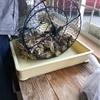 門司の豊前1粒牡蠣