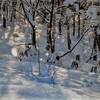 名寄市 道立サンピラーパーク森の休暇村の早朝の絶景【12月15日撮影】