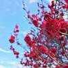 梅と山茶花など