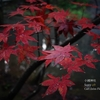 【Sony α9 / オールドレンズ】小國神社に紅葉を撮りにリベンジしてきました