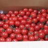 トマトが届いた