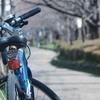 Photo No.53 / 桜を撮りに