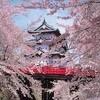 弘前の桜の開花時期